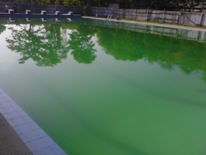 Cara Ampuh untuk Mengatasi Kolam Renang Berlumut