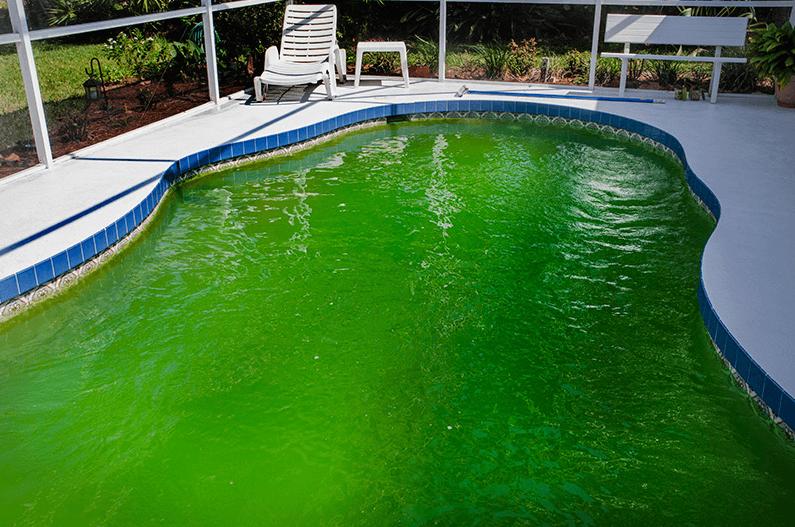 Cara Ampuh untuk Mengatasi Alga Kolam Renang
